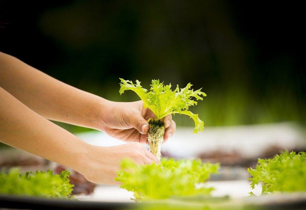 ベトナムのハイテク農業