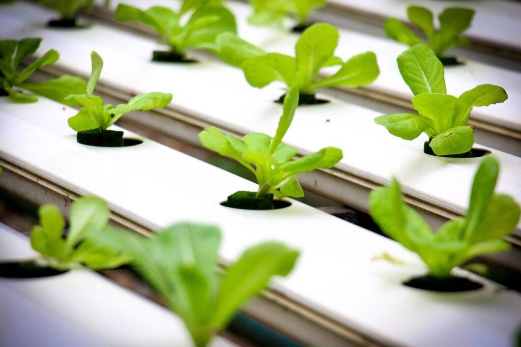 ベトナム農業テクノロジー