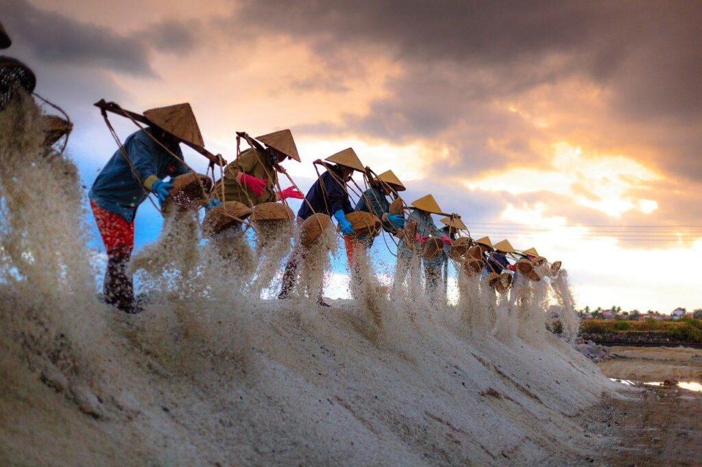 ベトナムの米作