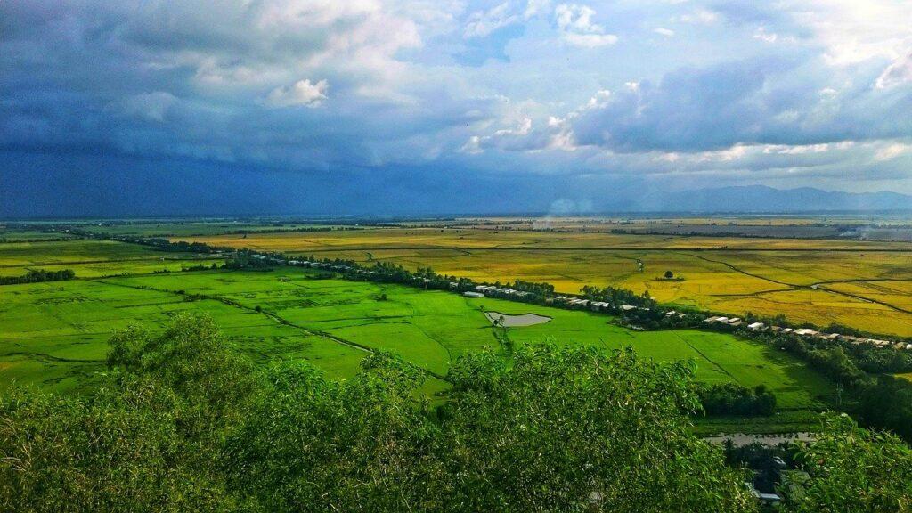 ベトナムの農場