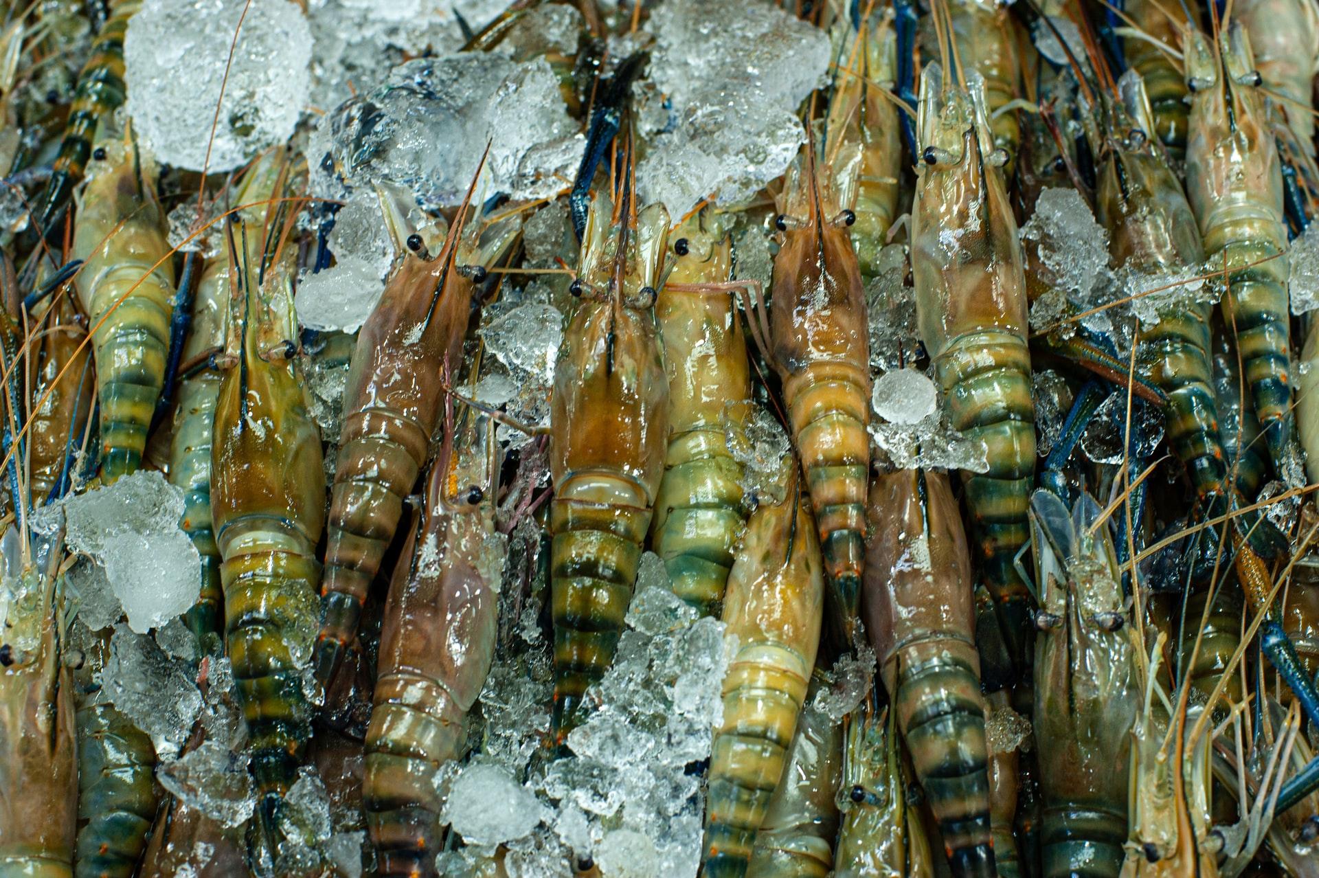 vietnam shrimp